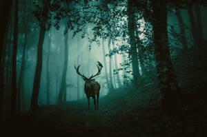 Forest World