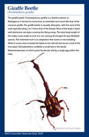 Vector Giraffe Beetle