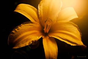 Finding The Light by marklarsen