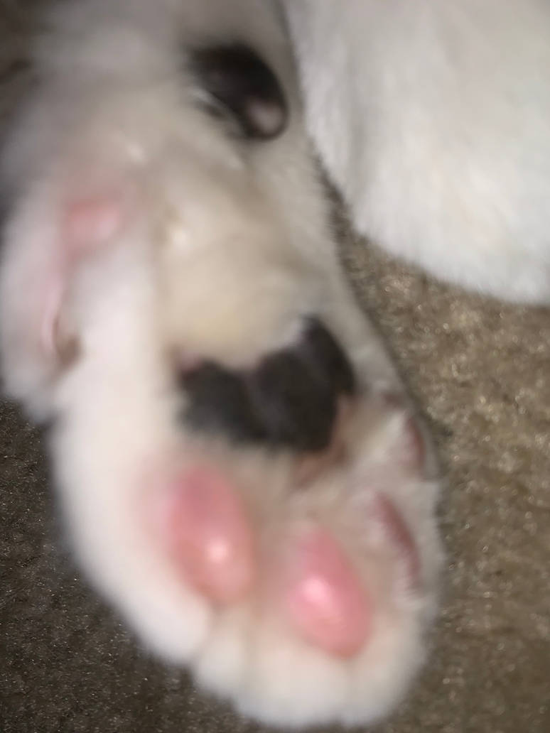 Toe Beans by Uvulatale