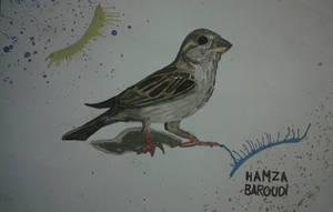 House Sparrow by HBX-FT06
