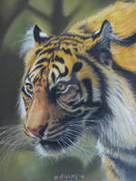 Silent Hunter - a Colored Pencil Drawing