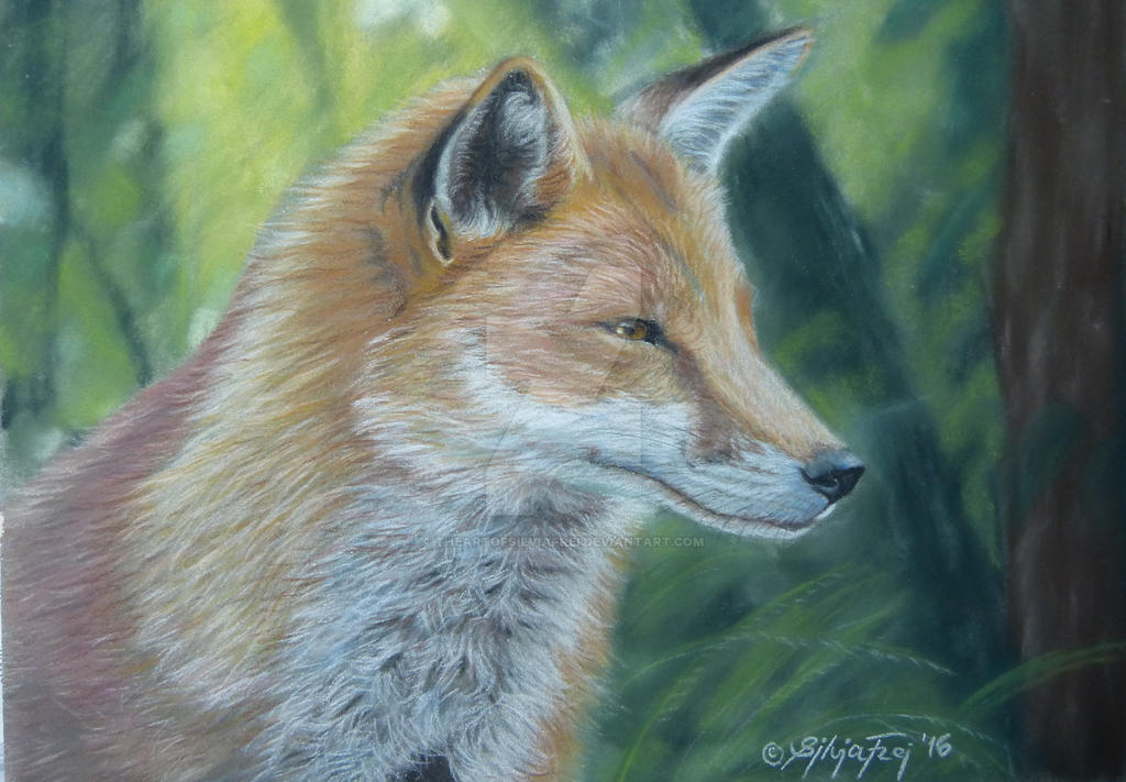 Fox portrait in pastel by theArtofsilviafrei