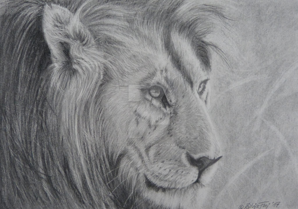 Charcoal Drawing of a Lion by theArtofsilviafrei