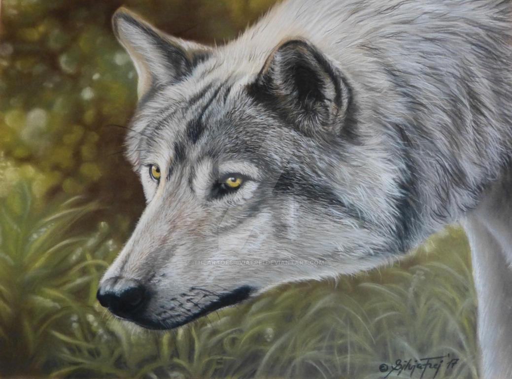 Wolf - Portrait in pastel by theArtofsilviafrei