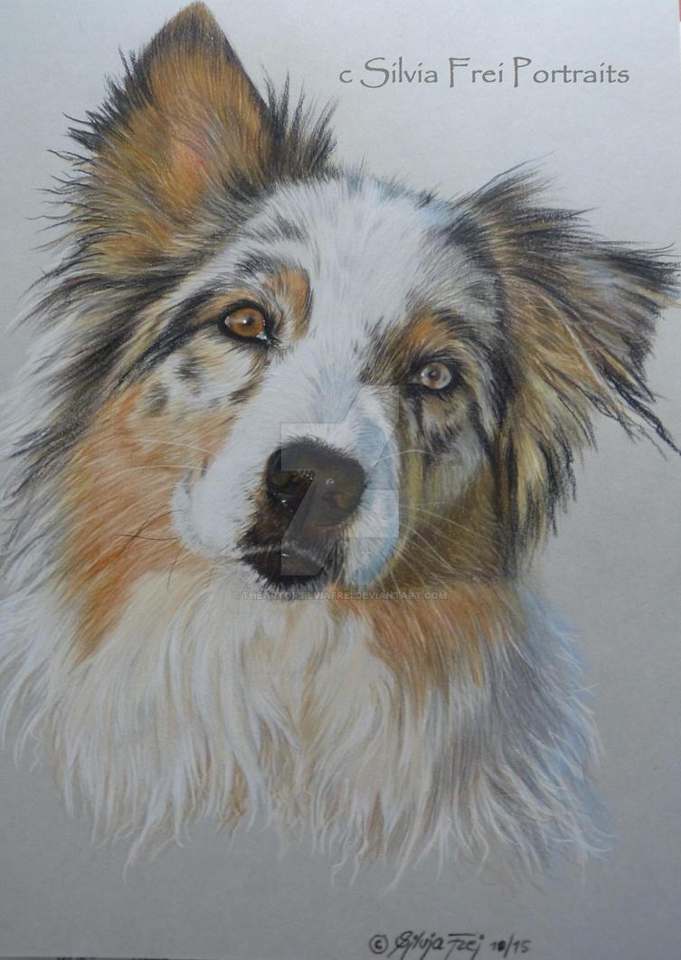 Australian Shepherd Portrait by theArtofsilviafrei