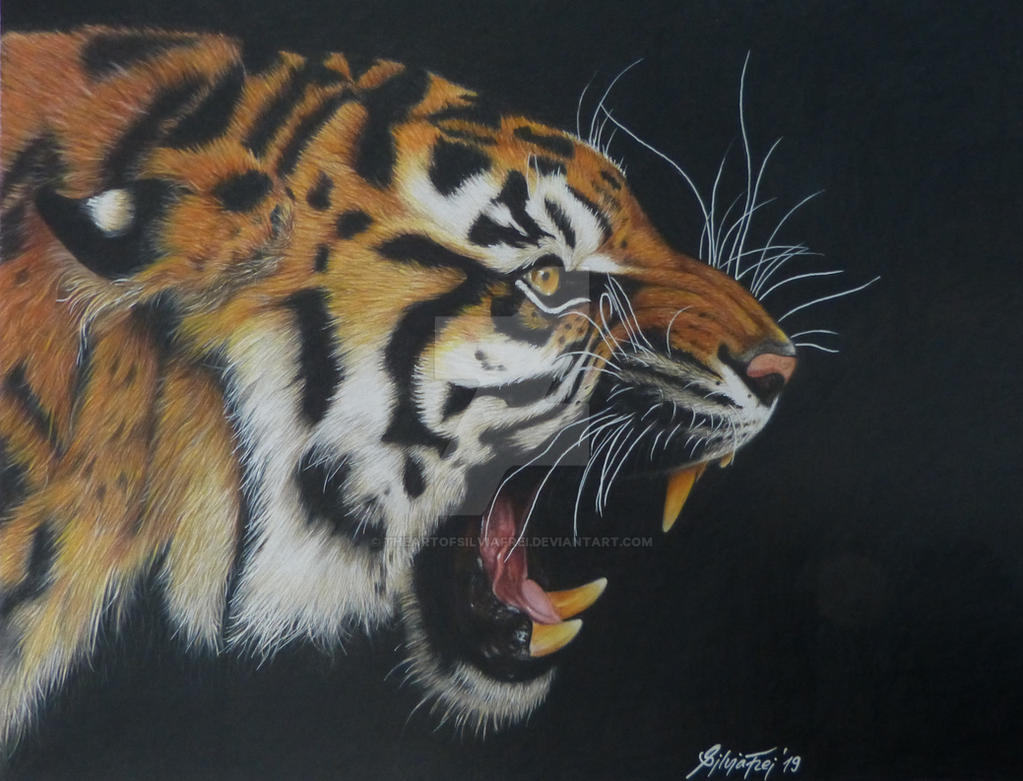 Roaring tiger colored pencil drawing by theartofsilviafrei on