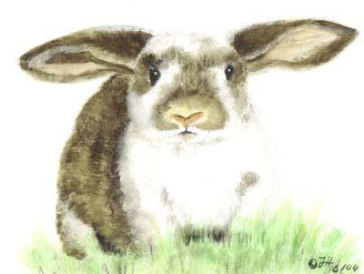 Rabbit by Shivarou