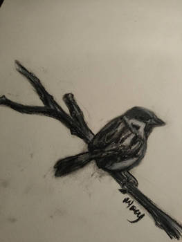 Charcoal Bird Drawing