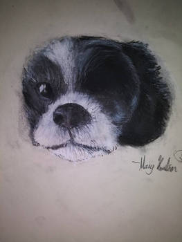 Petey the Dog Charcoal Drawing
