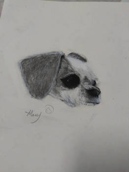 Ripley the Dog Charcoal Drawing