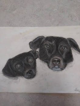 Ernie and Junior Charcoal Drawing