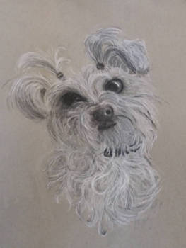 Zona the Dog Charcoal Drawing