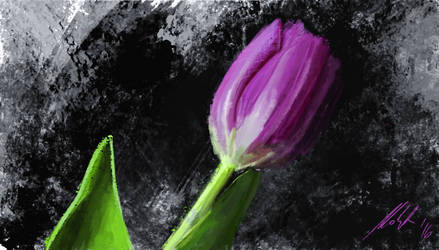 Tulip by michalmotyka