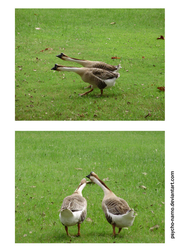 Marching Geese by psycho-namo