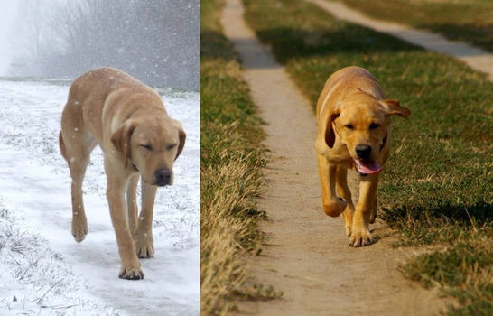 Running Free in Winter and Summer