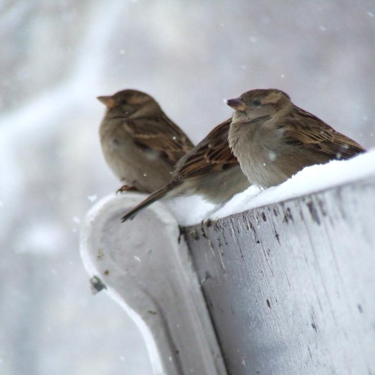 Silent Snow by Socrahcat
