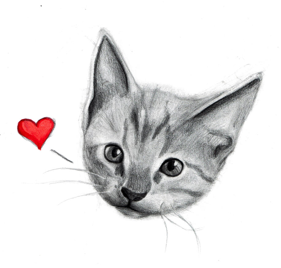 Kitten by SporadicDuck