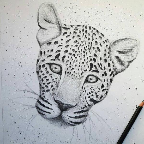 Leopard by SporadicDuck