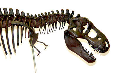 Tyrannosaurus Rex / T-rex Skeleton Sculpture Head by Weapon-X-1973