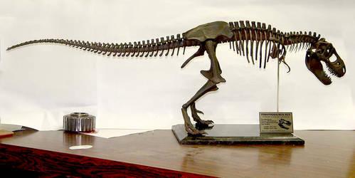 Tyrannosaurus Rex / T-rex Skeleton Sculpture body