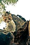 CAt by gokhangezici