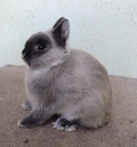 rabbit-stock's Profile Picture