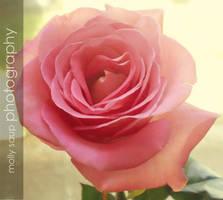 Rose by Cashpawz