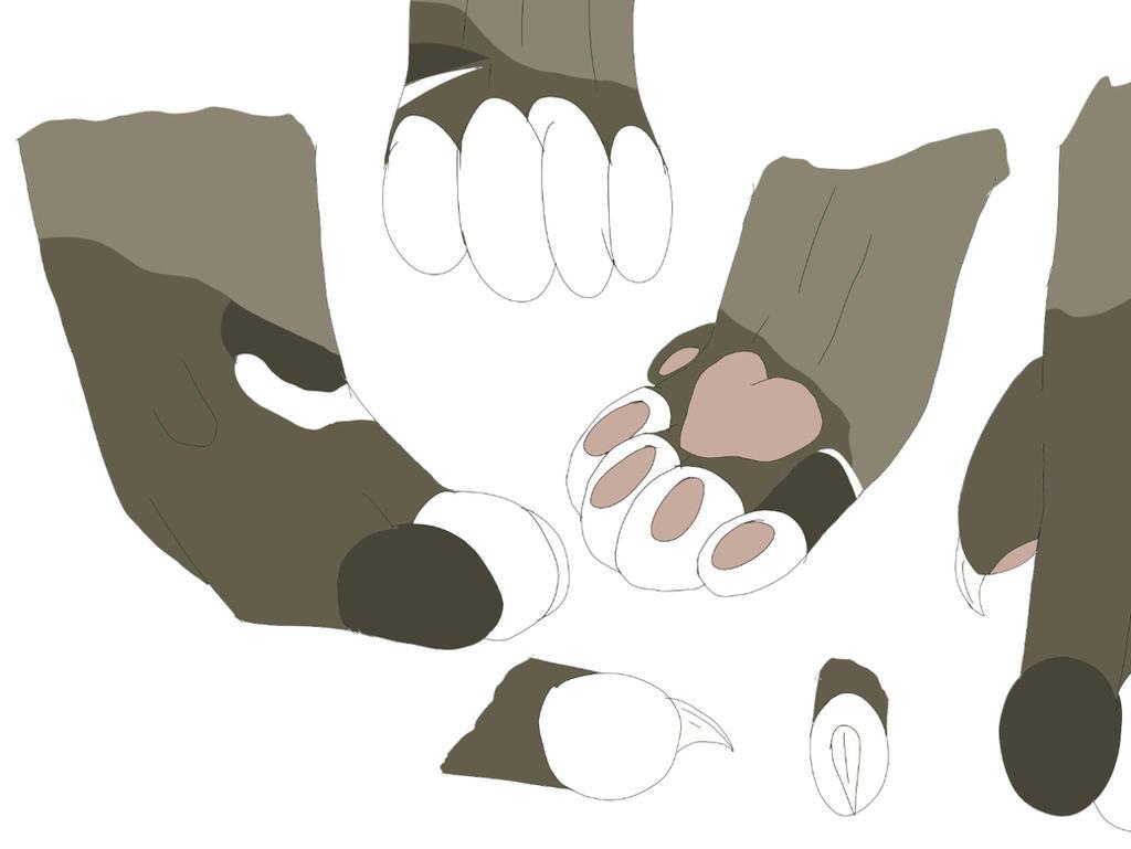 Cat paw anatomy by Craxysquare on DeviantArt
