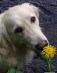 IMG 07 - dog