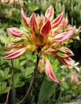 IMG 17 - flower