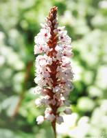 IMG 31 - flower