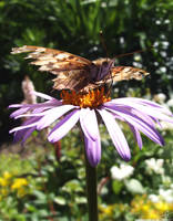 IMG 32 - butterfly