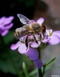 IMG 35 - bee