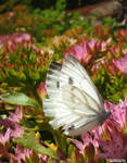 IMG 36 - butterfly