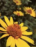 IMG 37 - flower