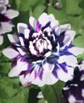 IMG 39 - flower