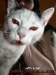 Meow the Killer