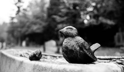 Birds by scarteh