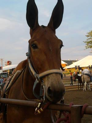 Mule by axiom463