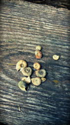 Snail Shells on a Bench by axiom463
