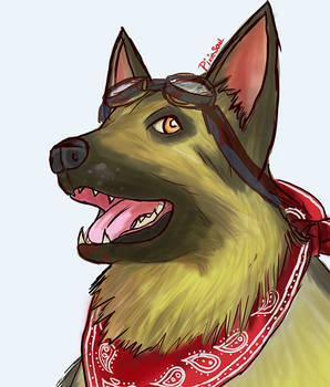 The Dogmeat