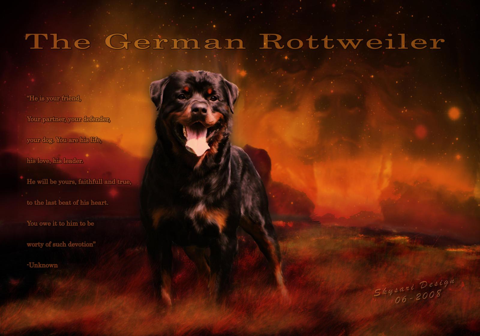 Cool Rottweiler Wallpaper More Information Modni Auto