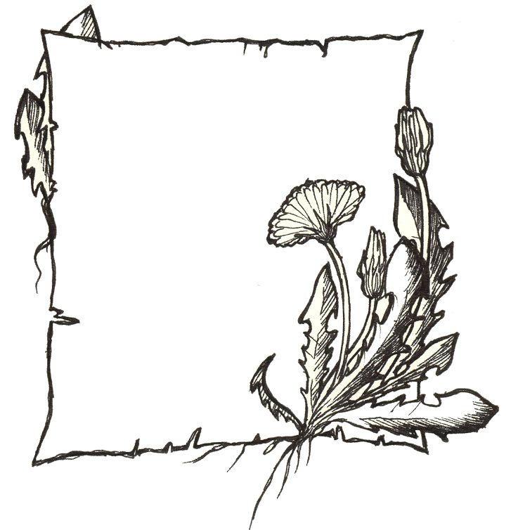 Dandelion by silene-acaulis