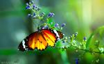 Butterfly .moth