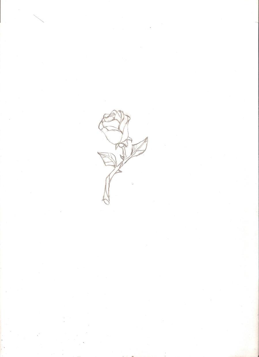 Enchanted Rose Drawing: The Enchanted Rose By DameElise-de-la-Rose On DeviantArt