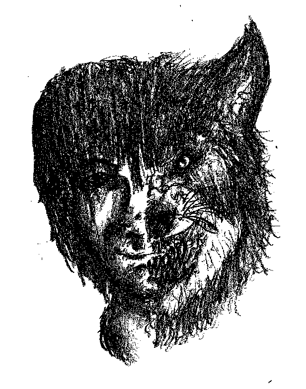 Half Human Half Wolf Male Half Man Half W...