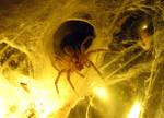 Spider Night 001