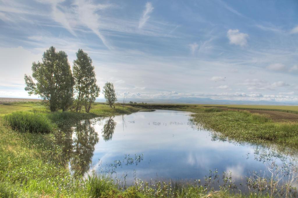 Pond by kingrabbit