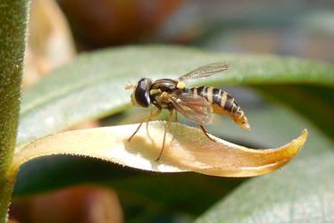 Sweat Fly 2 by kingrabbit